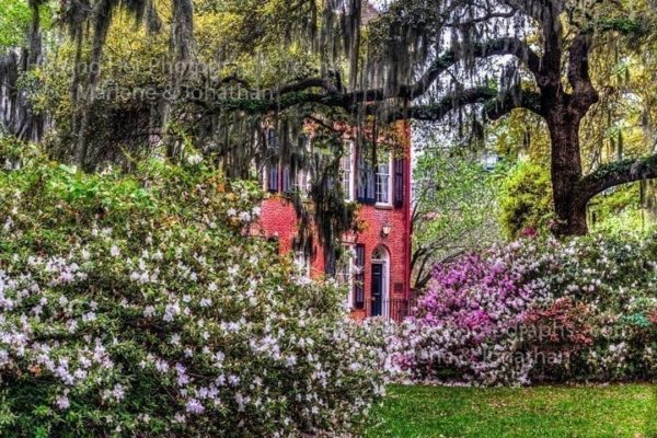 Savannah Collection Photo - Savannah Square #Sav20