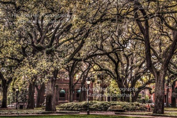 Savannah Collection Photo - Savannah Square #Sav60