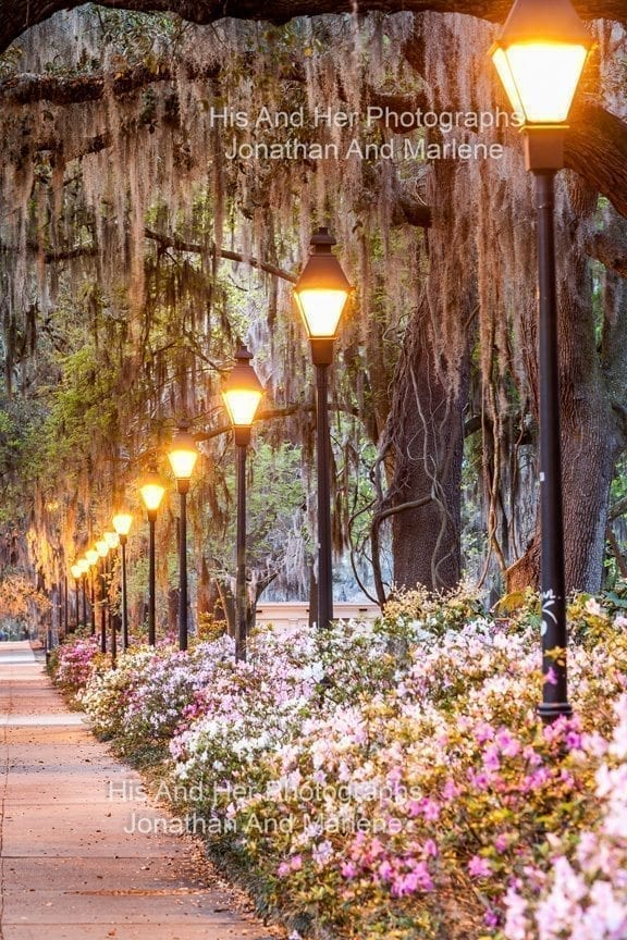 Savannah Collection Photo - Lamp posts at Forsyth Park Sav#19